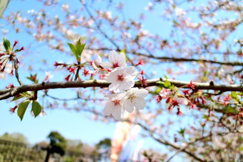 Kanazawa01_S__14336015