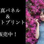 ユミ(純情のアフィリア)のサイン入りA3サイズ写真パネル&A4サイズフォトプリント